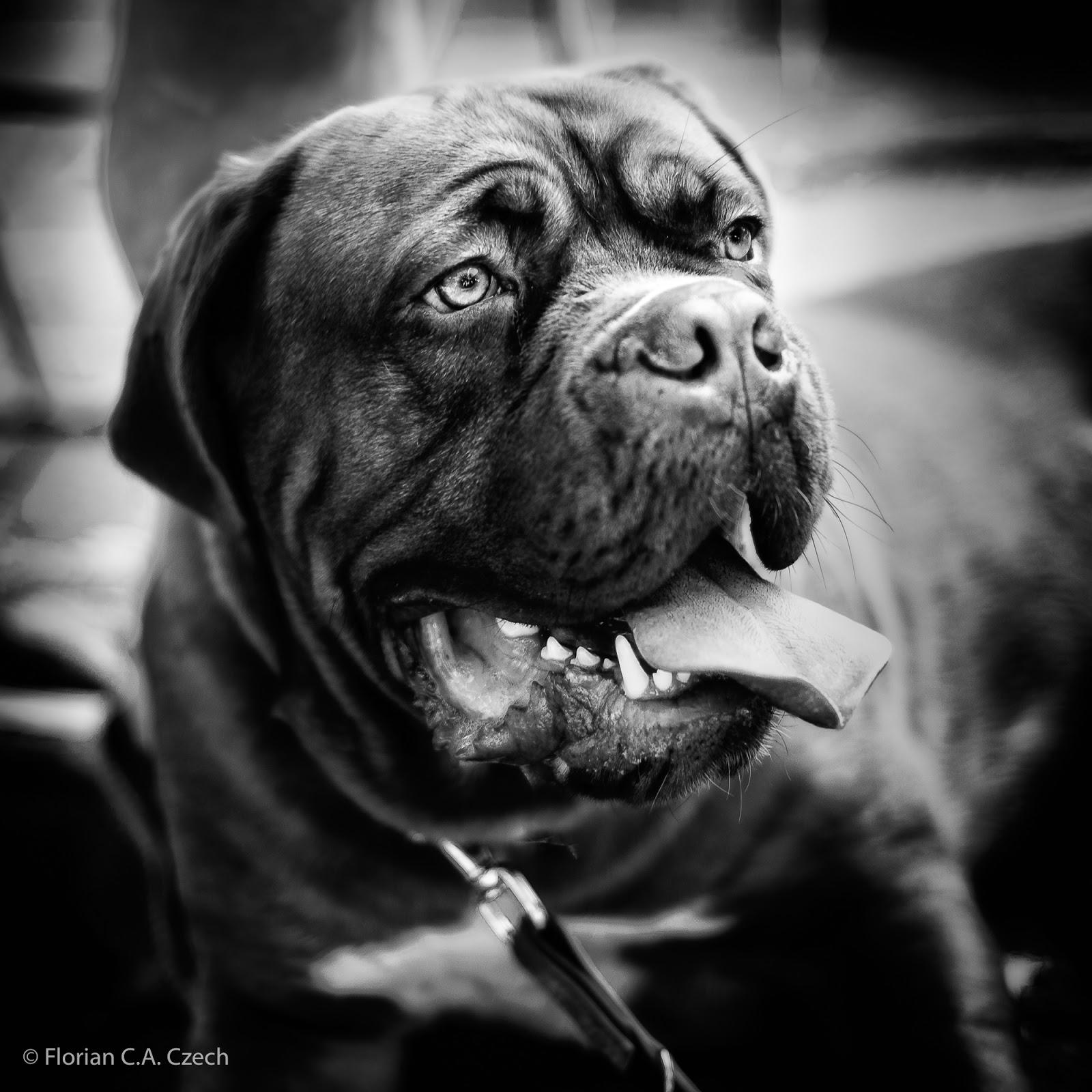 Hund in schwarz weiss