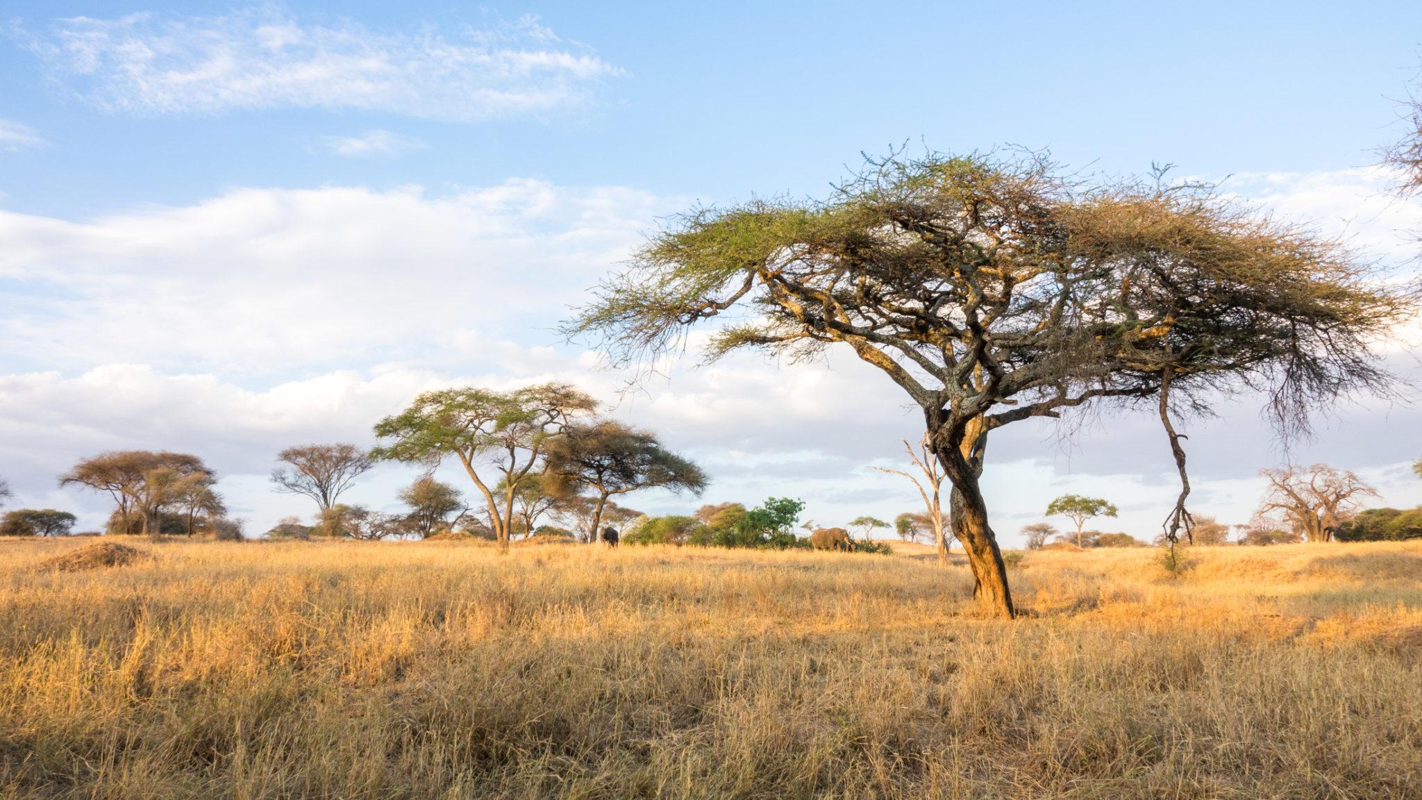 Elefanten im Sonnenuntergang im Tarangire Nationalpark, Tansania