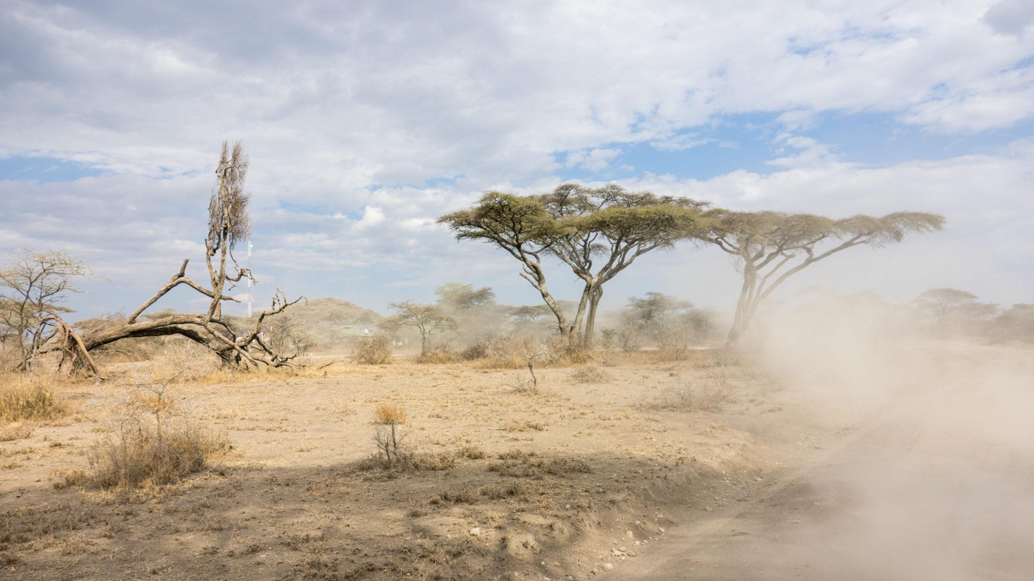 Staubige Piste im Ndutu Gebiet, Tansania