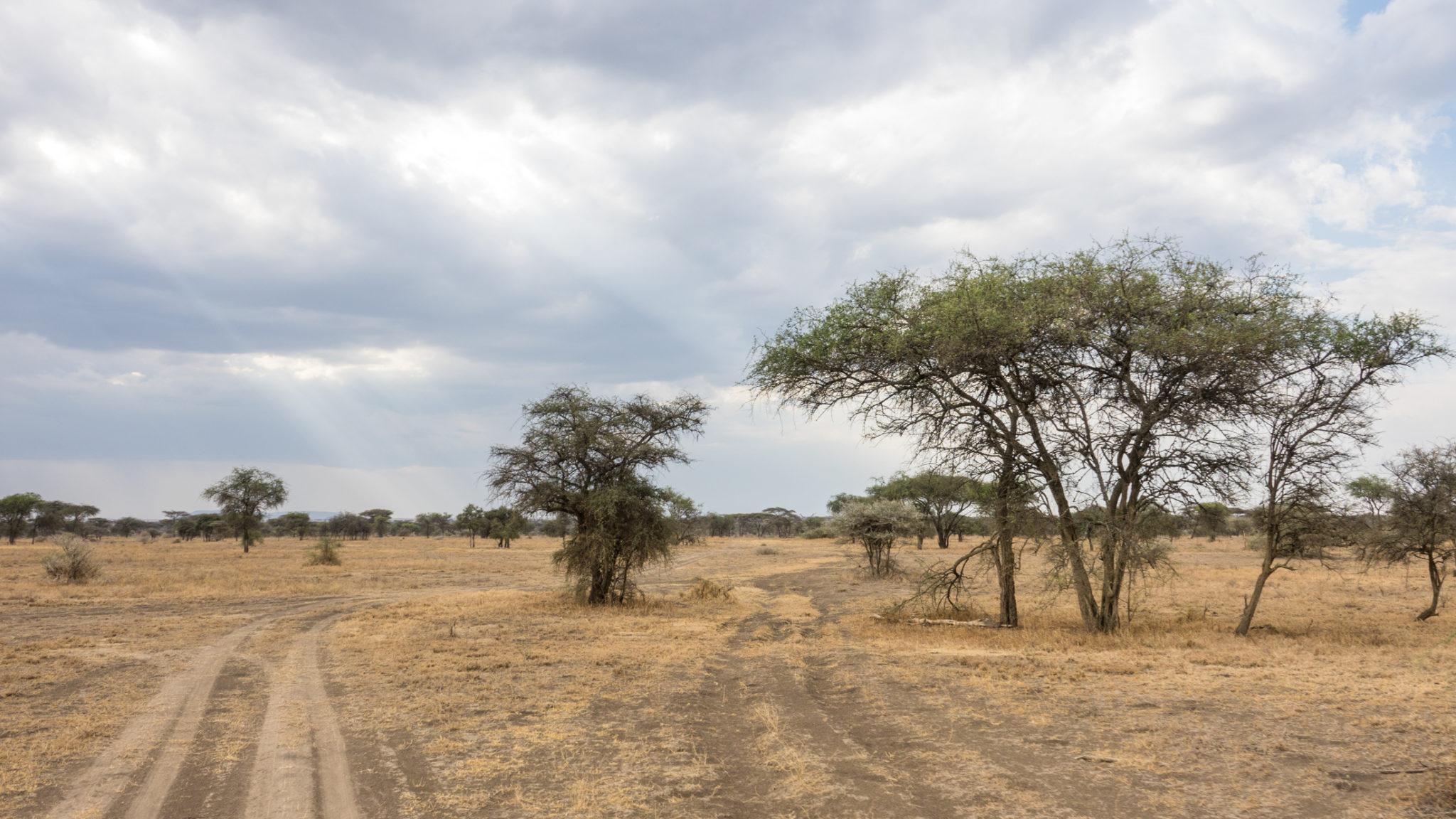 Landschaft und Wege im Ndutu Gebiet, Tansania