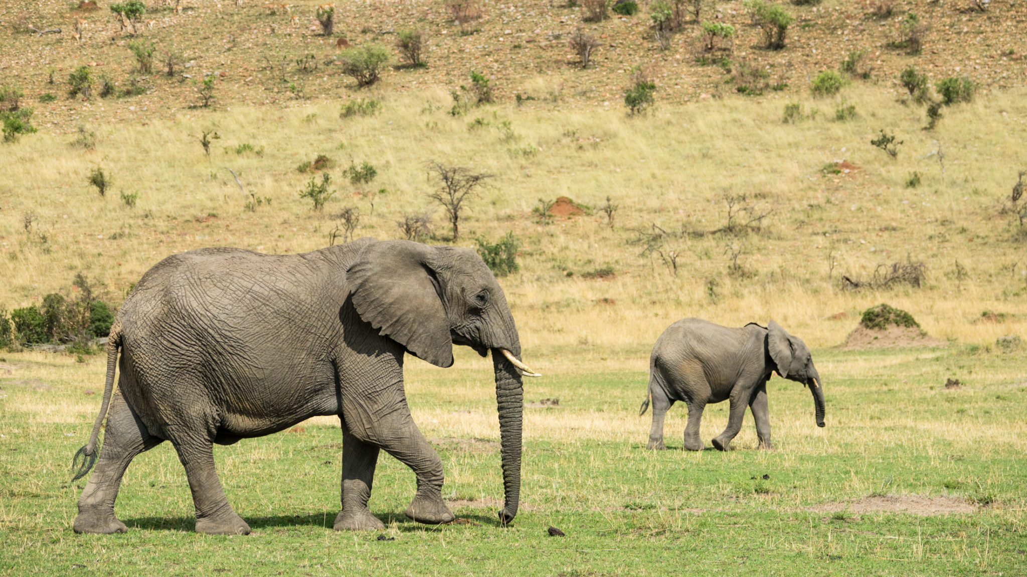 Elefantenmutter mit Kalb Serengeti, Tansania