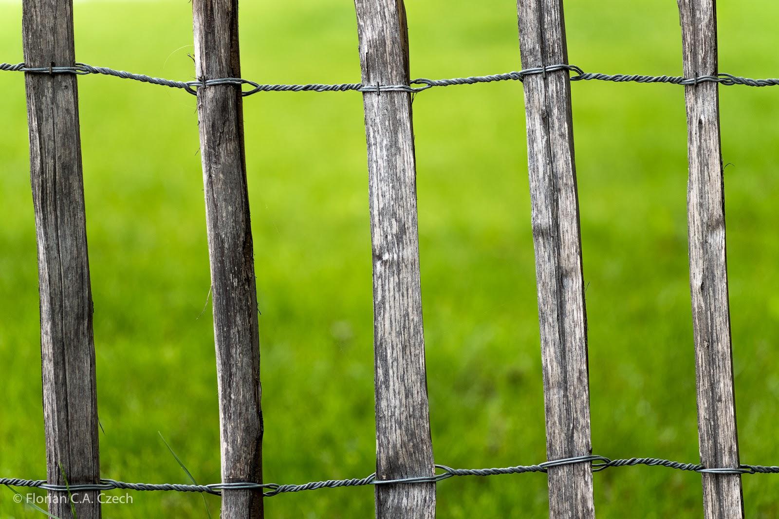 Zaun auf einer grünen Wiese