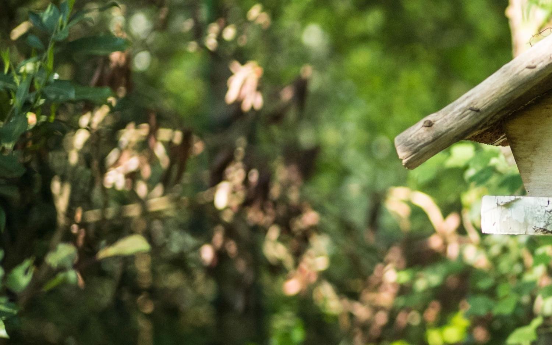 Bokeh Leica M 50mm 1.4 asph.