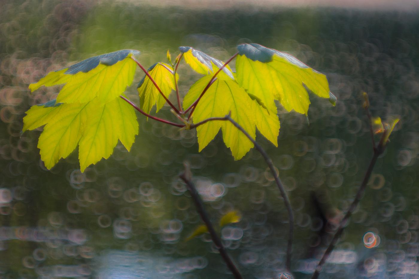 Leica-Thambar-Blatt