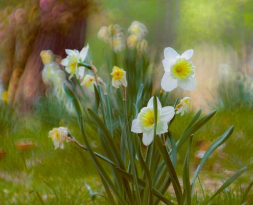 Leica Thambar 90mm 2.2 - FOTO-GÖRLITZ