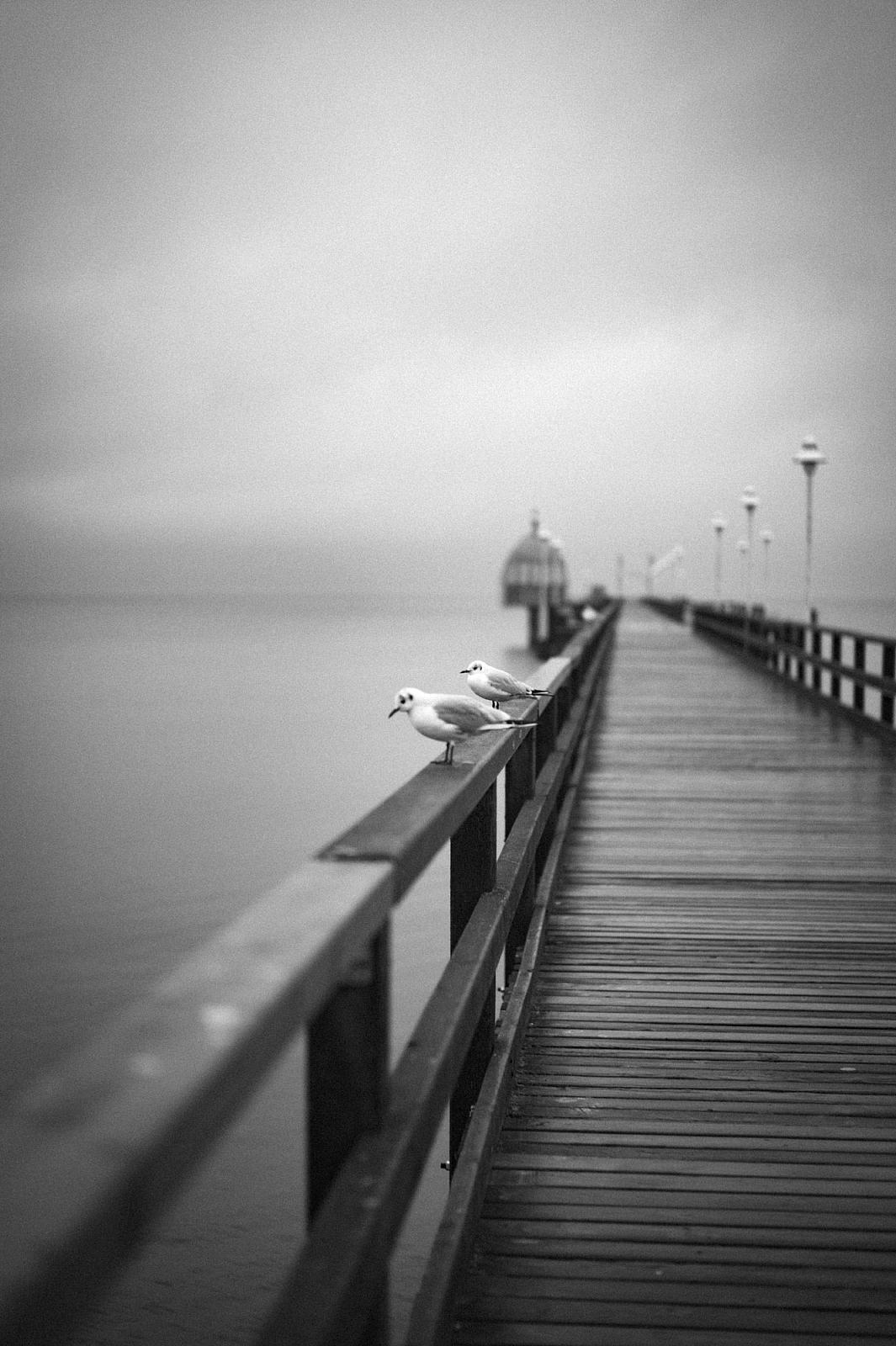 Leica-M-Monochrom-Tim-Bucka5